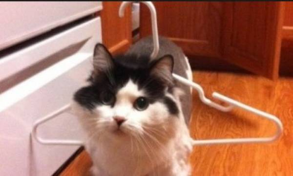 http://media-saver.com/funniest-pic-of-the-day/you-are-stuck-cat-edition-21-photos/