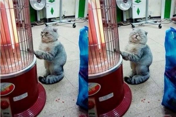 http://amazing-creature.blogspot.fr/2016/05/funny-cats-part-202-40-pics-10-gifs.html#.V02K65GLS70
