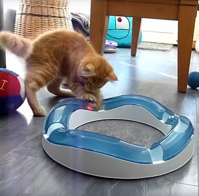 jouets-indispensables-chat-miniature
