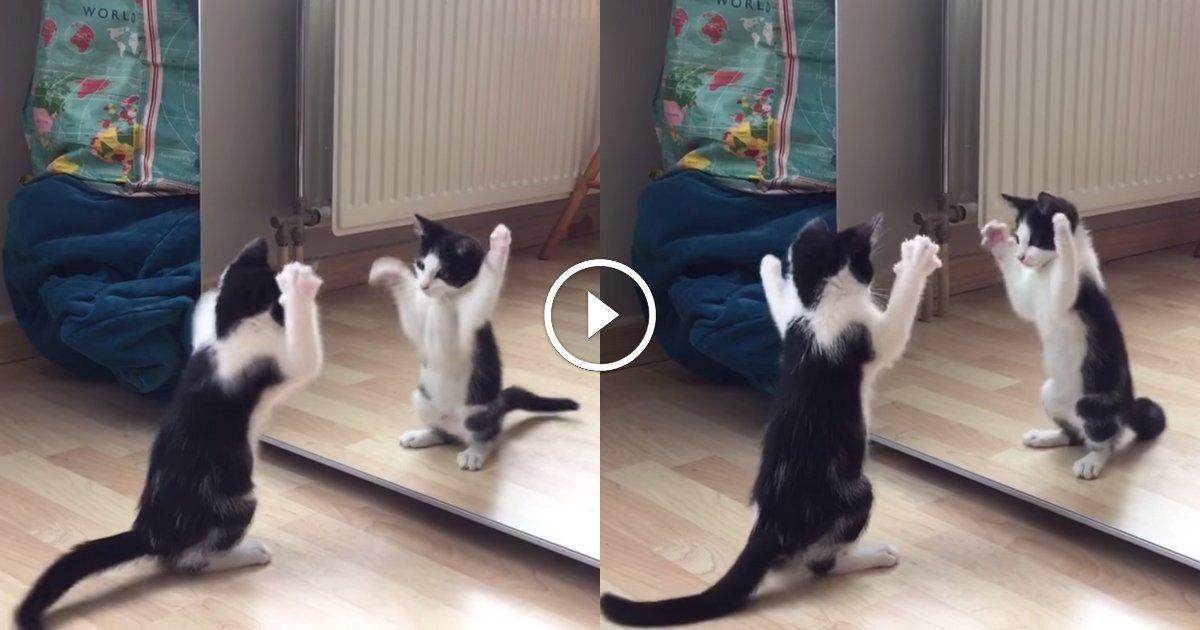 Petit chat miroir fb animaaaaals for Miroir des chats