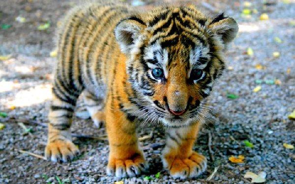 bébés-animaux-trop-mignons (1)