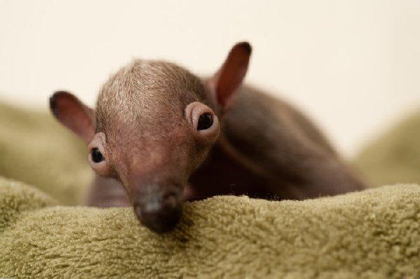 bébés-animaux-trop-mignons (10)