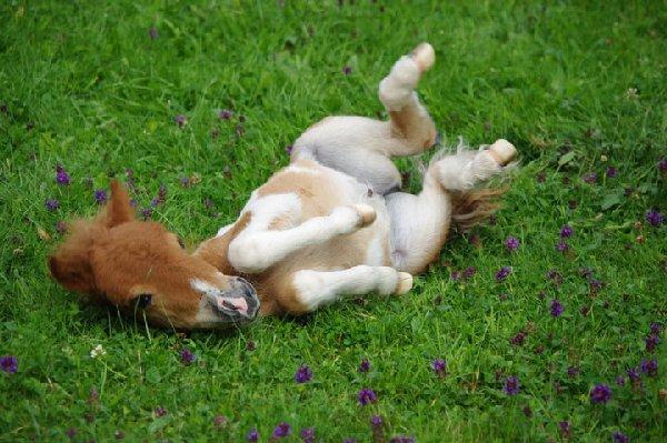 bébés-animaux-trop-mignons (12)