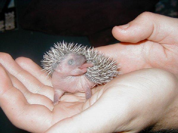 bébés-animaux-trop-mignons (16)