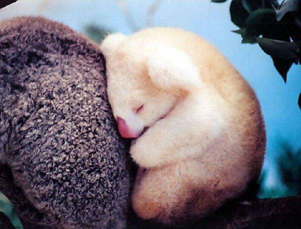bébés-animaux-trop-mignons (20)