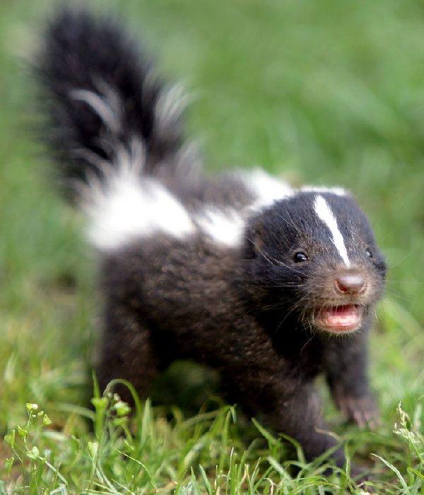 bébés-animaux-trop-mignons (21)