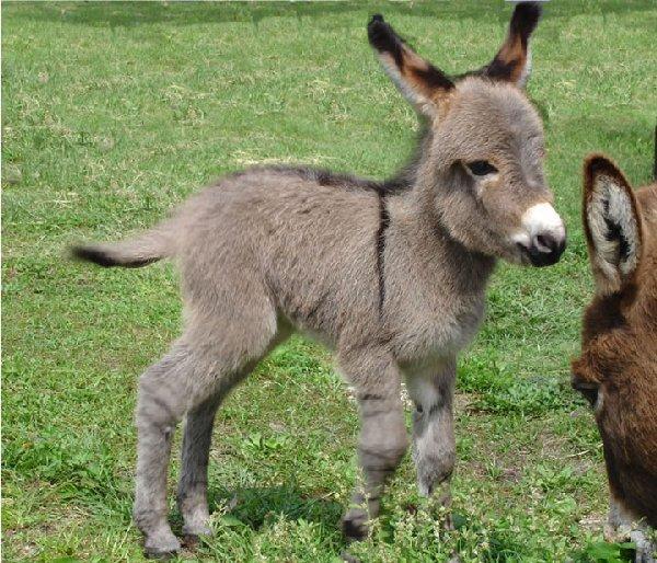 bébés-animaux-trop-mignons (23)