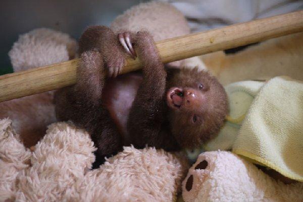 bébés-animaux-trop-mignons (26)