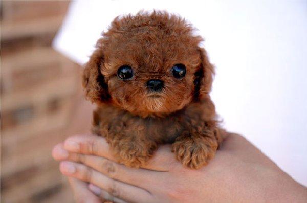 bébés-animaux-trop-mignons (28)