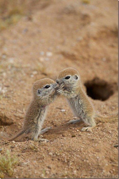 bébés-animaux-trop-mignons (3)