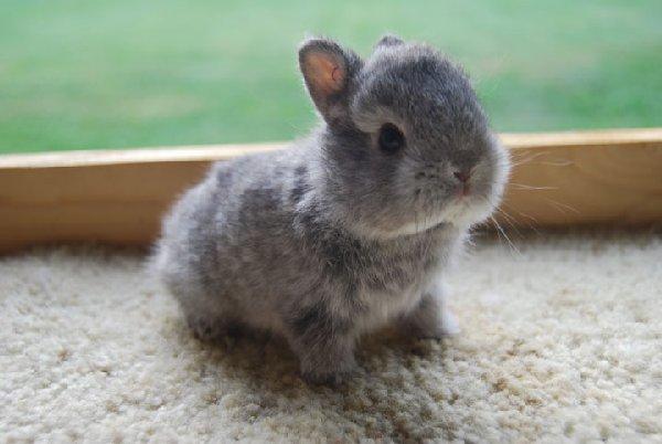 bébés-animaux-trop-mignons (7)
