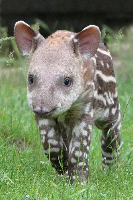 bébés-animaux-trop-mignons (9)