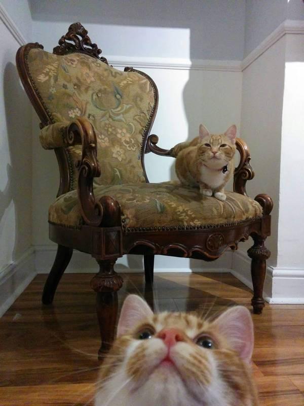 http://amazing-creature.blogspot.fr/2016/06/funny-cats-part-213-40-pics-10-gifs.html#.V3TojLiLS70