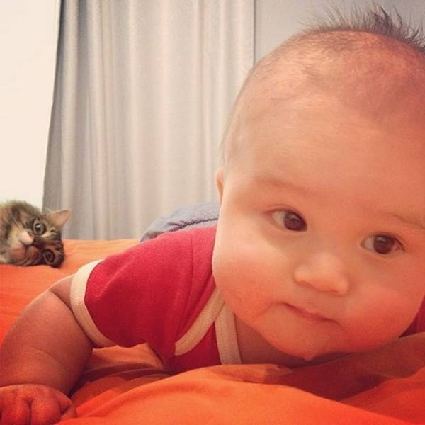 http://cattime.com/cat-facts/lifestyle/1712-25-cat-photobombs#/slide/15