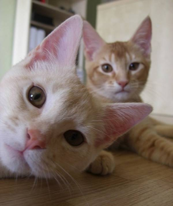 http://www.activecats.co.uk/best-cat-photobombs-ever/