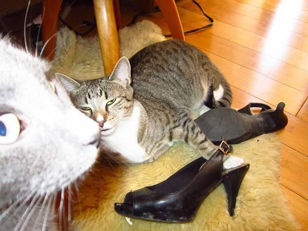http://www.catster.com/molz/6-ways-cat-photobomb