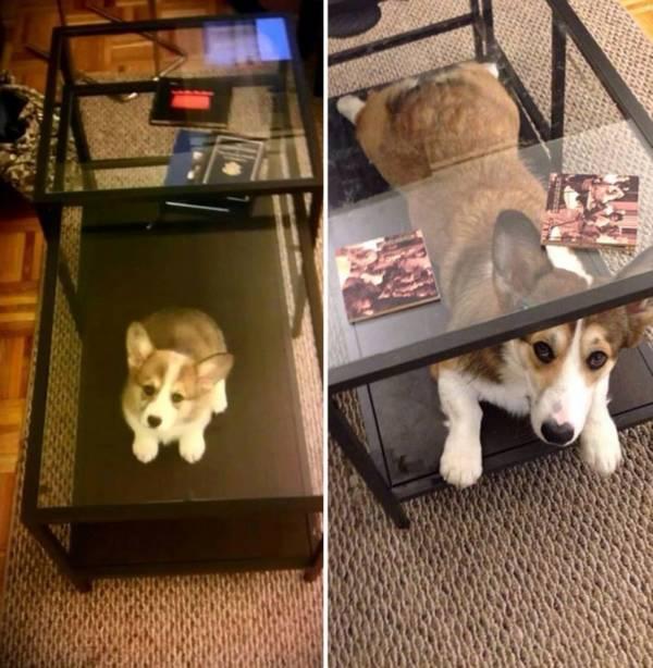 http://bestofweb.com.br/post/fotos-de-antes-e-depois-a-fofura-canina-e-a-mesma