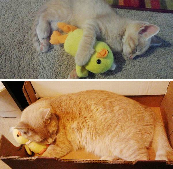 http://www.funnyjunk.com/Pets+and+their+toys/funny-pictures/5579303/