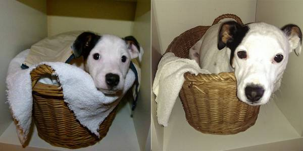 http://www.boredpanda.com/before-and-after-dogs/