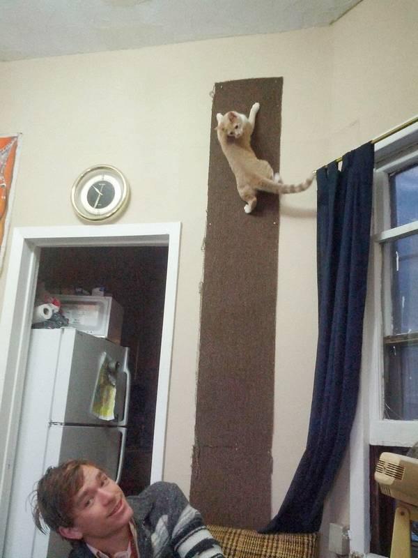 http://ilovefunnyanimal.blogspot.fr/2014/02/sharing-funny-cats-part-90-40-pics-10.html