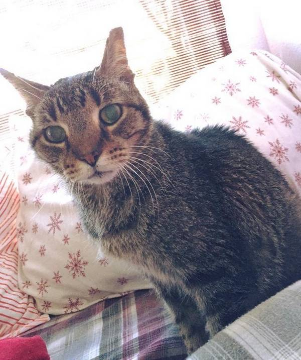 orion-chat-16-ans (2)