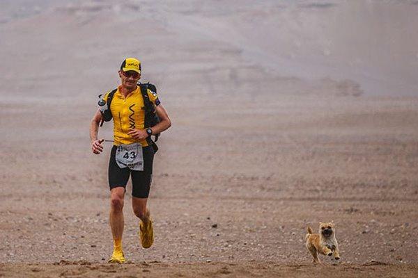 Chien-errant-marathon (2)