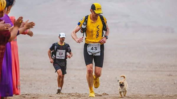 Chien-errant-marathon (8)