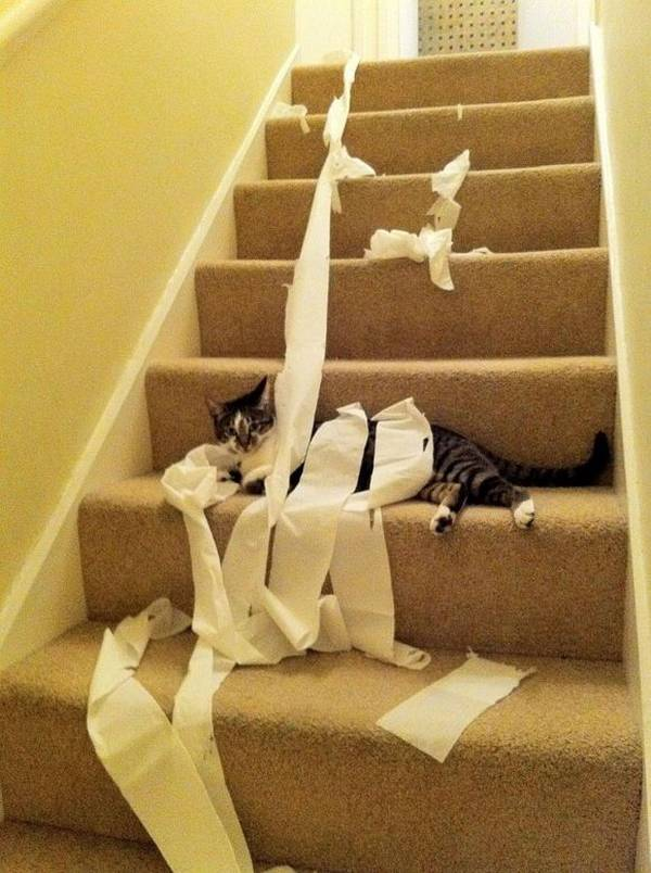 http://www.cutesexyfunnyawful.com/2010/10/cat-discovers-toilet-paper.html