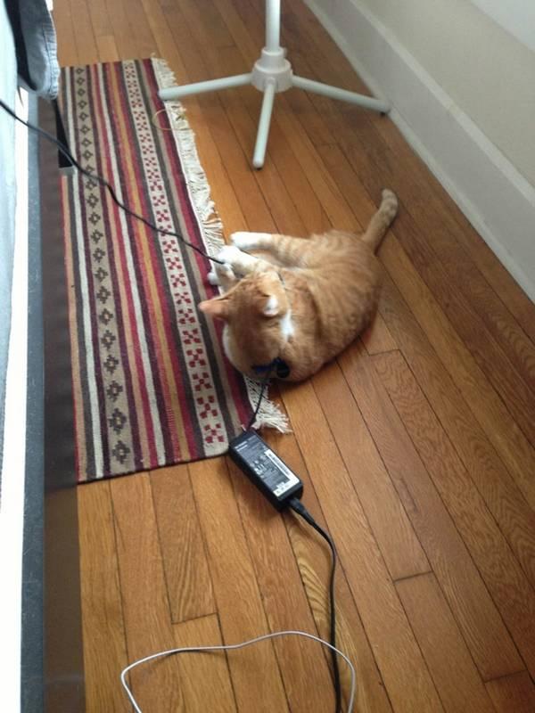 http://www.electramag.com.br/27-razoes-para-voce-nao-ter-um-gato/