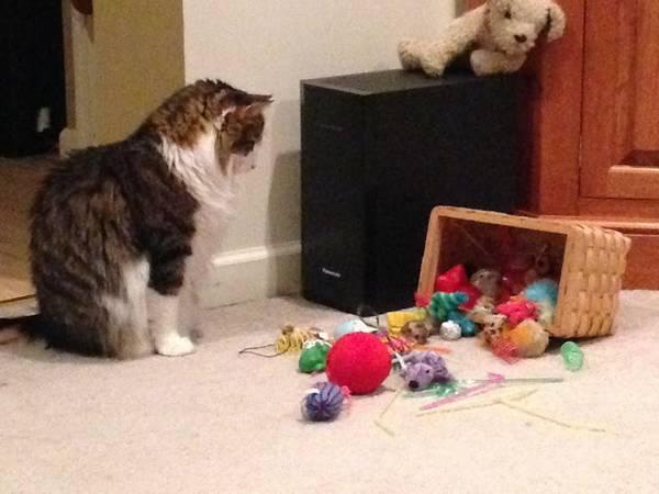 http://amazing-creature.blogspot.fr/2012/10/funny-cats-part-18-40-pics.html#.V7XgTpiLS70