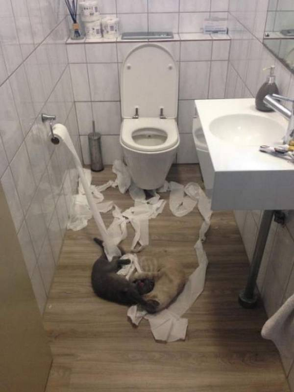 http://amazing-creature.blogspot.fr/2016/05/funny-cats-part-205-40-pics-10-gifs.html#.Vy-bafmLTRY