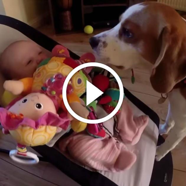 chien vole jouet bebe miniature animaaaaals. Black Bedroom Furniture Sets. Home Design Ideas