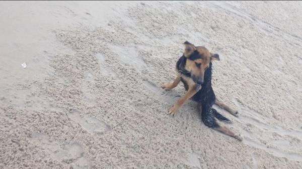 Léo quand il a été trouvé sur la plage par Meagan