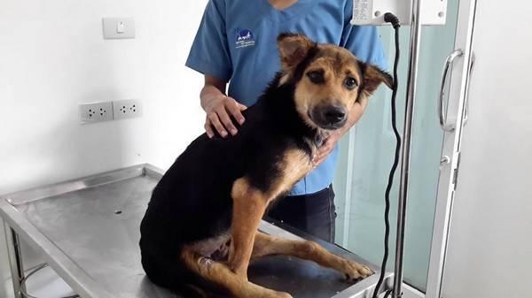 Léo chez le vétérinaire