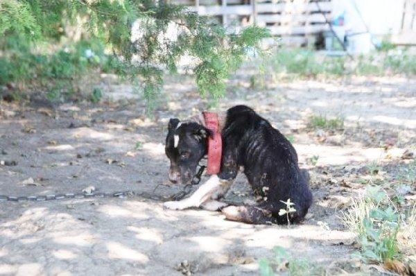 Cette chienne maltrait e tait trop triste pour relever la t te mais sa vie a chang gr ce l - Se couper les veines sans douleur ...