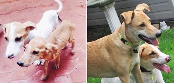 http://dogtime.com/dog-health/general/21863-38-happy-rescue-dogs-before-and-after-photo-gallery#/slide/9