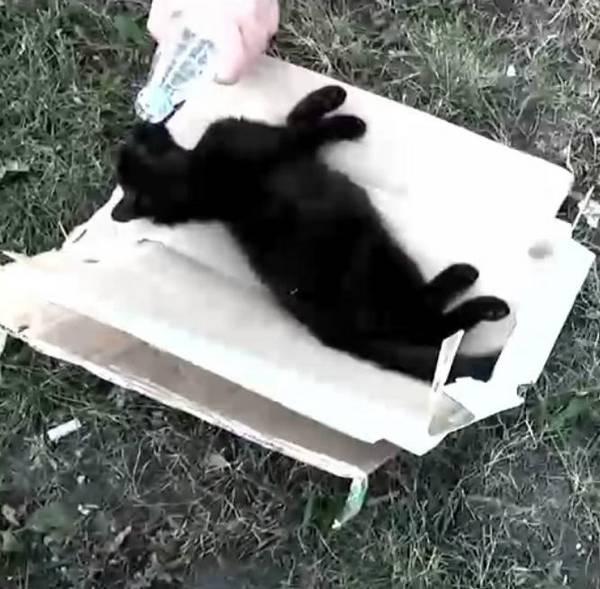 chaton-sans-vie-miracle-1