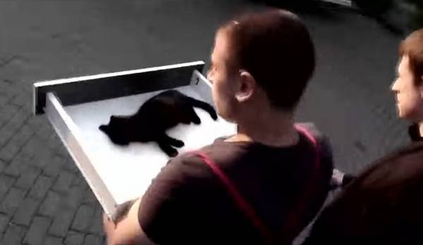 chaton-sans-vie-miracle-2