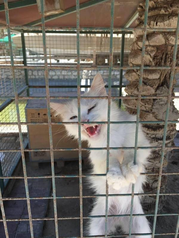 chats-chiens-zoo-bahrein-colleen (2)