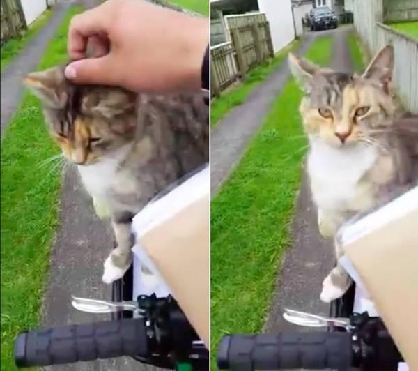 chatte-facteur-rituel-2