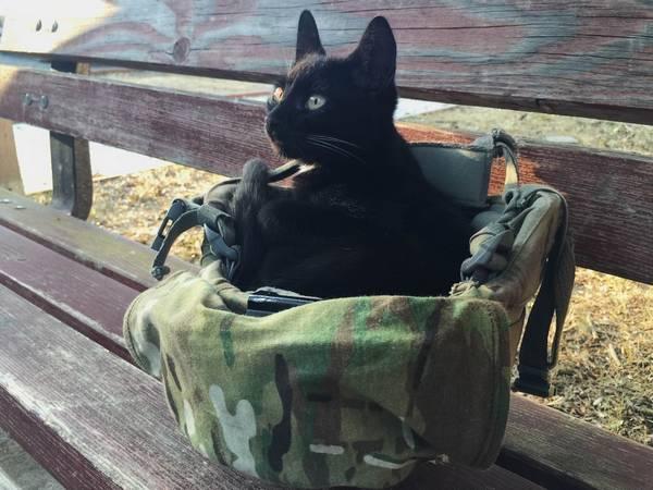 salem-chat-soldat-2