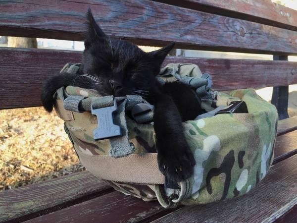 salem-chat-soldat-3