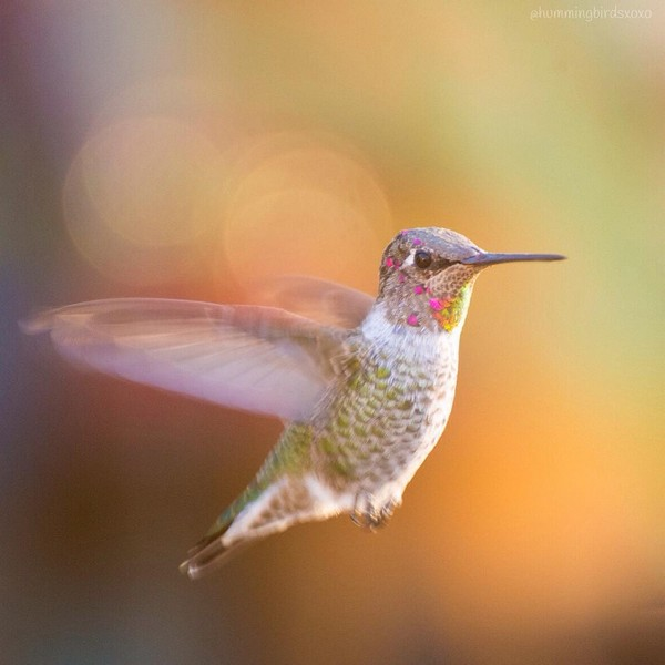 Tracy Johnson / hummingbirdsxoxo