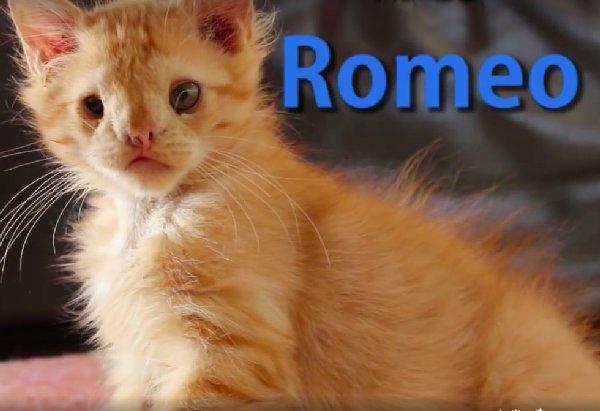romeo-1