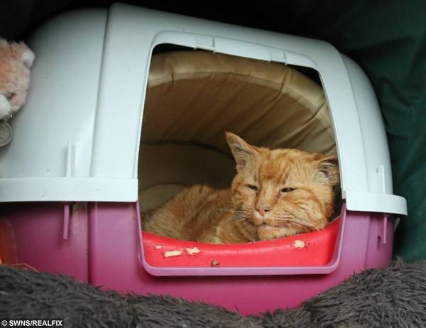 http://www.real-fix.com/general/tributes-pour-in-for-a-much-loved-cemetery-cat-who-consoled-mourners-for-over-20-years/