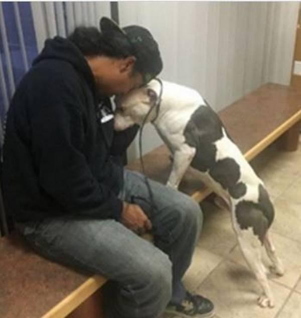 Photo : Detroit Youth & Dog Rescue