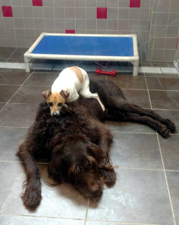 cc-chewy-chiens-refuge-2