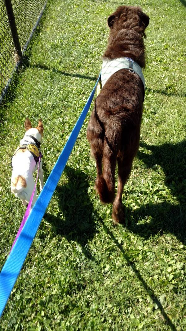 cc-chewy-chiens-refuge-4