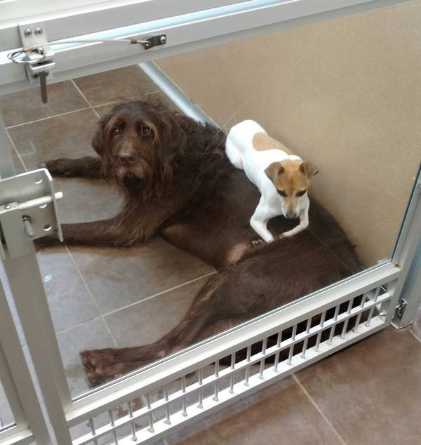 cc-chewy-chiens-refuge-7