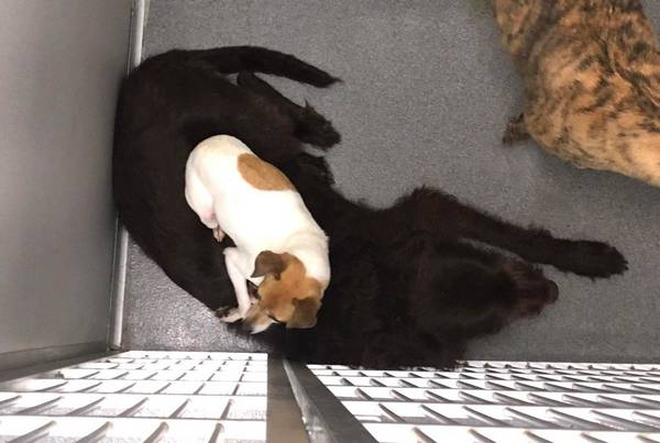 cc-chewy-chiens-refuge-8